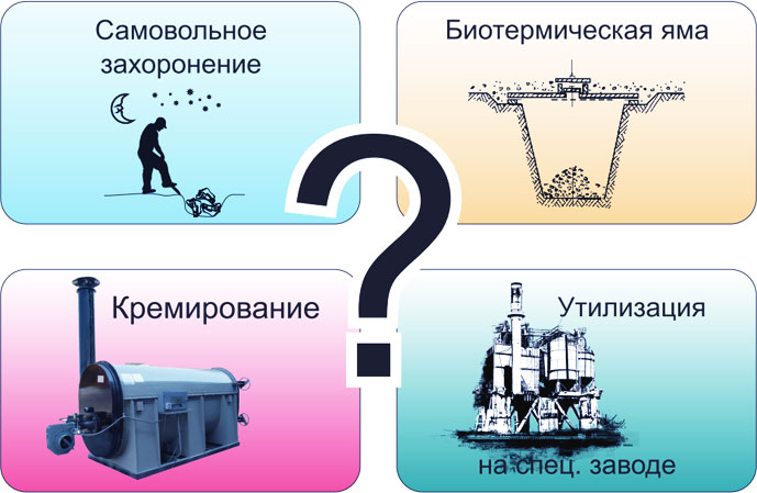 Варианты утилизации биологических отходов по договору